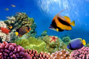 Vibrant Great Barrier Reef